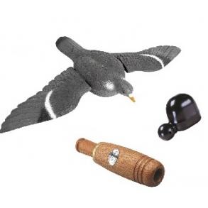 Lokkekald & Fugle